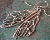cicada wings, 17 years