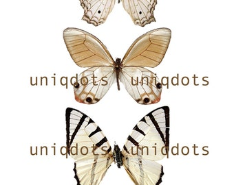SALE VERY LARGE butterflies - 3D wall decorative butterflies - wall decoration - wall decal - blush butterflies wall art by Uniqdots on Etsy