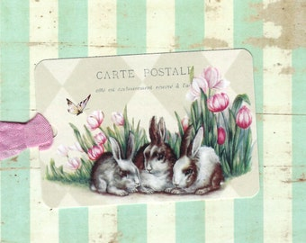 Tags Bunny Rabbits & Springtime Tulips