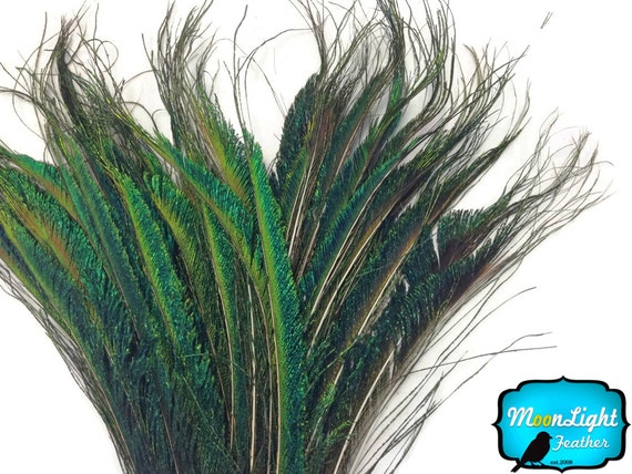 Peacock Sword, 10 Pieces - Natural Peacock Swords Cut Tail Feathers : 312