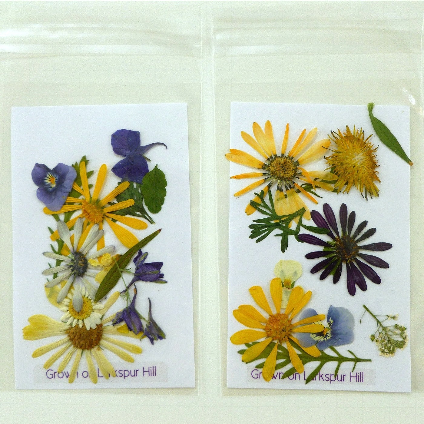 Pressed Wedding Flowers: Pressed Flowers, Wedding Decor, Dried Flowers, Craft
