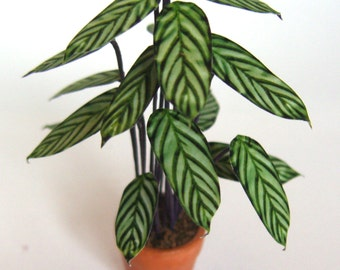 Dollhouse plant STRIPED CALATHEA handcrafted FLOWER Houseplant living room 12th scale handmade miniature