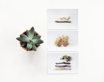 SALE SET 3 4x6 prints. Fine Art Photographic Natural History Print. Minimal simple style. Natural Home Decor. Indoor garden botanical