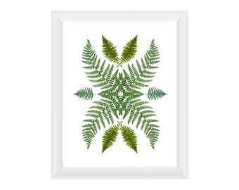 Ferns. 8.5x11. Fine Art Photographic Natural History Print. Minimalist. Natural Home Decor. Indoor garden botanical.