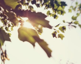 sun  through the leaves, fine art print, sun flare, lensbaby spark, nature photography, green leaves, summer, nature wall art