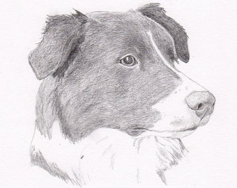 Border Collie Signed Personalized Original Pencil Drawing Double Matted Print -Free Shipping- Desert Impressions