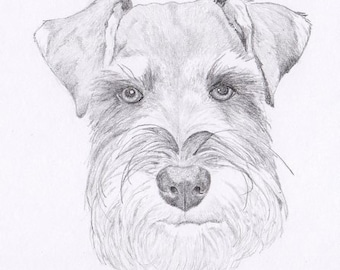 Schnauzer Signed Personalized Original Pencil Drawing Double Matted Print -Free Shipping- Desert Impressions