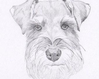Schnauzer (drawing) by FeelDaViibe on DeviantArt
