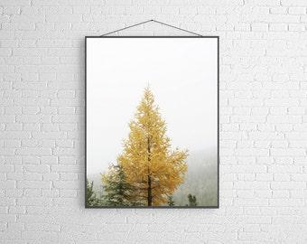 Tree Photography Yellow Tree Tamarack Tree in the Mist Autumn Landscape Photograph