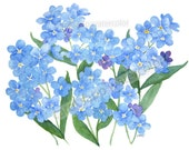 forget me nots watercolor giclee print full view
