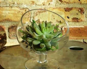 Faux Succulent Terrarium, Succulent Terrarium, Succulent Planter, Succulent Garden, Indoor Garden, Artificial Succulent Garden