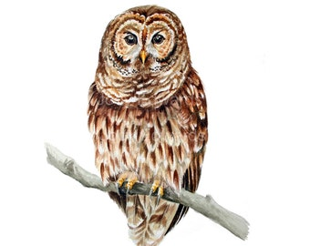 Owl Painting - Original watercolor painting of a Barred Owl