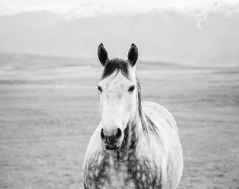 Black and White Horse Country Photograph, Equestrian Art