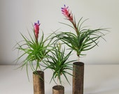 Individual Air Plant with Stand // Modern Home Decor // Plant Decor // Tillandsia Plant Stands