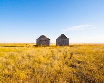 Prairie Landscape Nature Photograph - Colorful, Rustic, Modern - Bright Blue Sky, Golden Fall Field, Simple Weathered Sheds, Path