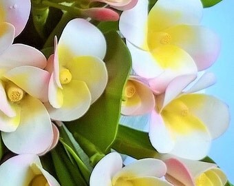 Hot Price, Polymer Clay Flowers Supplies Tropical Frangipani for Handmade Gifts, 10 bunches