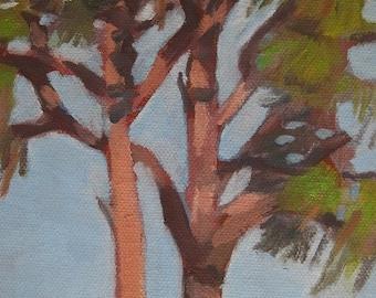 Tree Painting Original Plein Air Oil Painting