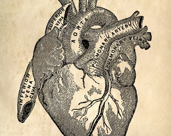 Heart Anatomy Vintage Reproduction Print. Human Biology Chart Diagram Educational Science Poster Doctor Office gift science - CP101