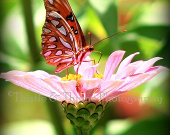 Butterfly Photographic Art Print - 5x7 Photographic print