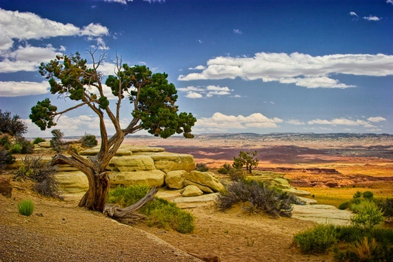Juniper Tree on a Mesa in Utah No.0812 -  A Fine Art Western Landscape Photograph