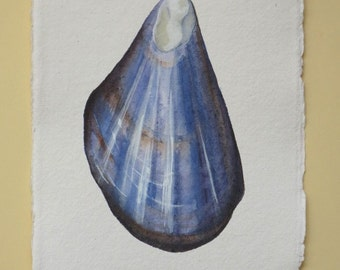 Original watercolour illustration mussel sea shell from a series set beach ocean