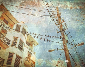 Urban Birds On Wires Blue Brown Distressed Photography