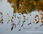 The Floating Reeds