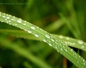 Raindrops on Dune Grass Photo Green Beach at The Porcupine Mountains in Michigan's Upper Peninsula--Fine Art Photograph Home Office Decor