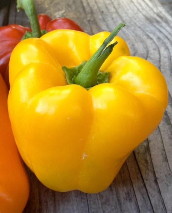 SALE Yellow Bell Pepper Seeds Golden Wonder Rare