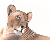 Lioness Watercolor painting- wildlife art- PRINT of watercolor painting 5 by 7 size