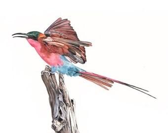 Bee Eater watercolor painting bird art - Print of watercolor painting 5 by 7 wall art print - bird art print