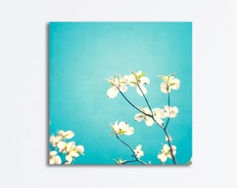 "Aqua Canvas Wrap - flower photography blue canvas print dogwood floral white botanical wall art photo modern, 24x24, 20x20, 16x16 ""Delicate"""