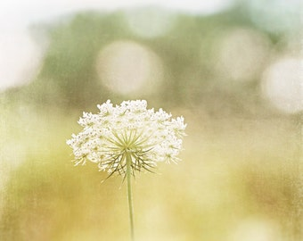 """Queen Annes Lace Photography, yellow cream pale beige neutral white nature large nursery wall art baby girls room botanical photo, """"Dreamy"""""""