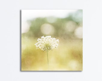 """Canvas Photography, pale yellow photography cream nature white queen annes lace light beige neutral wall print nursery photography, """"Dreamy"""""""