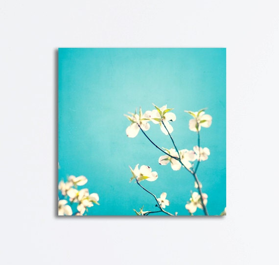 "Aqua Canvas Wrap - flower photography blue canvas print dogwood floral white botanical wall art photo modern, 24x24, 20x20, 16x16 ""Delicate"""