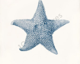 Blue Coral Art Print - Lophaster Stellanis Blue - Beach Decor - Home Decor