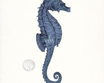Coastal Decor Antique Sea Horse Natural History Art Print - indigo