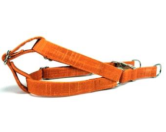 Orange Dog Step in Harness