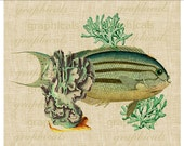 Teal coral Teal fish ocean Instant Digital download graphic image for Iron on fabric transfer burlap decoupage pillow card tote bag No. 2129