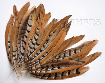 Wholesale / bulk feathers - Reeves (Venery) pheasant tail feathers, natural brown feathers 60 pcs / 7.5-10 in (19-25 cm) long, FB133-7/60