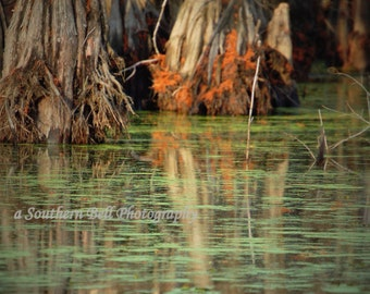 ReflectionsTree Photo Water Shot Photograph Print Water Photography 8x10 Trees Fall Trees Swamp Lake Pictures Red Tree Louisiana Bayous 7