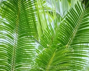Fern Botanical Print -Fine Art Photograph - Nature Wall Art - Home Decor - green patterns