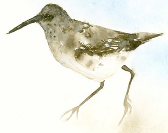 Sandpiper Watercolor Fine Art Print