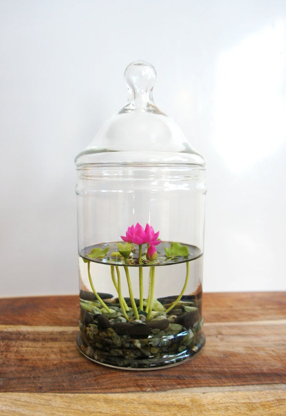 water terrarium indoor gardening