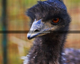 "Bird ""Emu"" Fine Art Photograph"