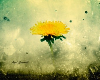 Dandelion Art, Yellow Print, Dandelion Photography, Flower Wall Art, Teal and Yellow, Home Decor, Yellow Abstract Art, Nature Print