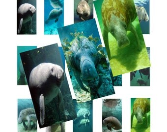 Manatees 1x2inch Domino Images Digital Collage 026