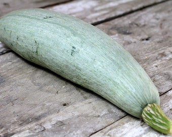 Big Blue Guatemalan Heirloom Winter Squash Seeds Very Rare Non GMO