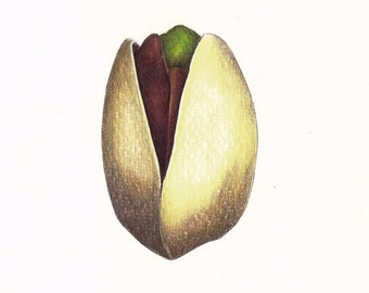 """Pistachio art print of an original drawing available 5x7"""" or 8x10"""""""
