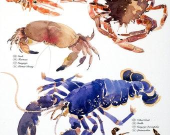 Shellfish, a print featuring Lobster, Velvet Crab, Spider Crab, Langoustine, Brown Crab, Langoustine and Scallop.